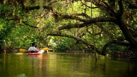 kayaking along the estero river