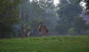 2nd Place_Tiffany Misenko_Deer family in the misty morning