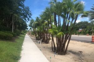 Estero Parkway progress