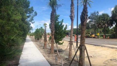 Estero_Parkway_landscaping