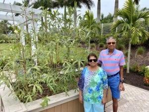Lalitha and Sekar Chandrasekaran grow okra in the Tidewater community garden