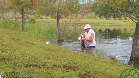 Richard Wilbanks saves puppy from gator